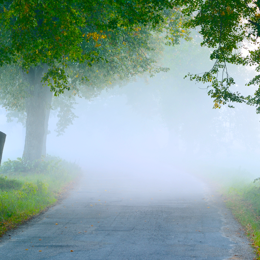 The Fog on the Road